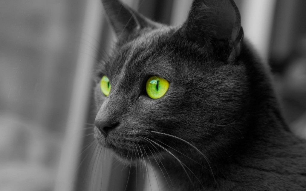 black-cat-animals-green-eyes-look-away-1920x1200