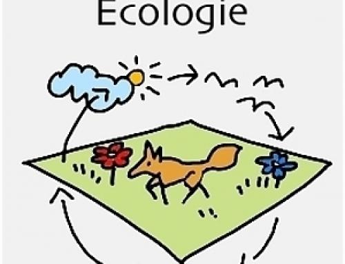Ecologie bovenbouw H/V