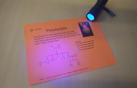 UV lampje